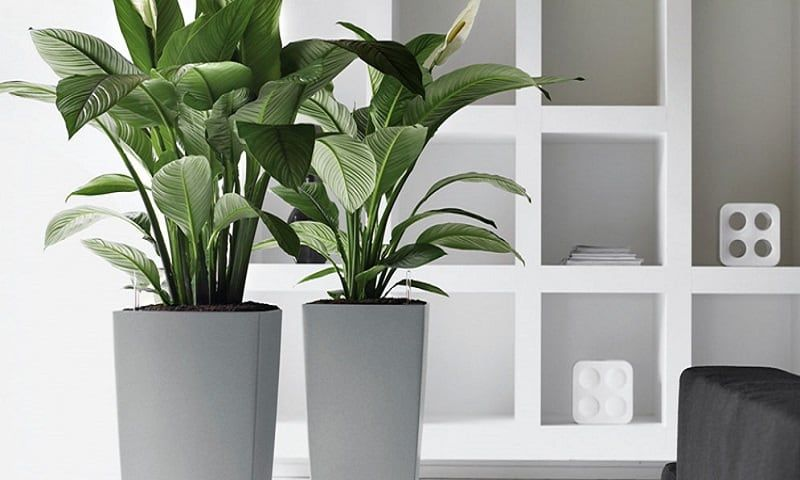 7 Great Indoor Plants To Improve Your Home S Environment Indoor Plants Plants Indoor Herb Garden