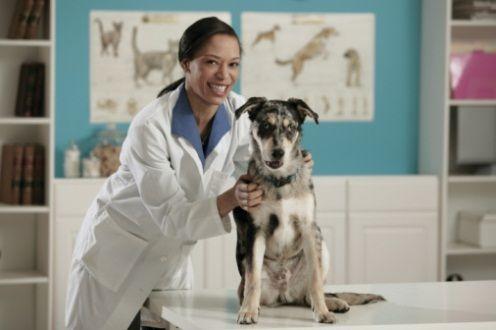 Cane dal veterinario  Pet Therapy