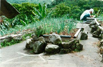 Sembrado de cebolla en la roca San Luis Tamesis Antioquia Colombia