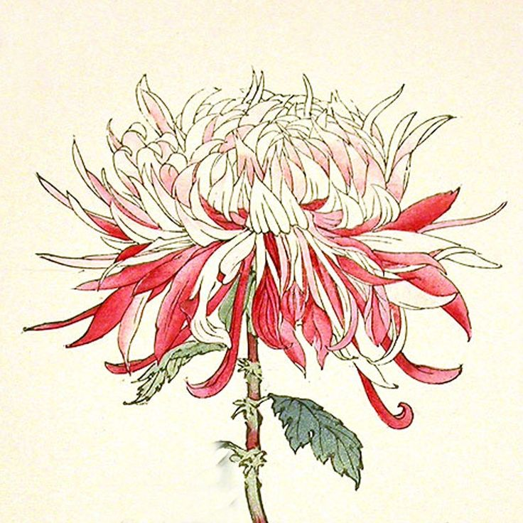 Japanese Flower Line Drawing : Japanese woodblock print red flower google search