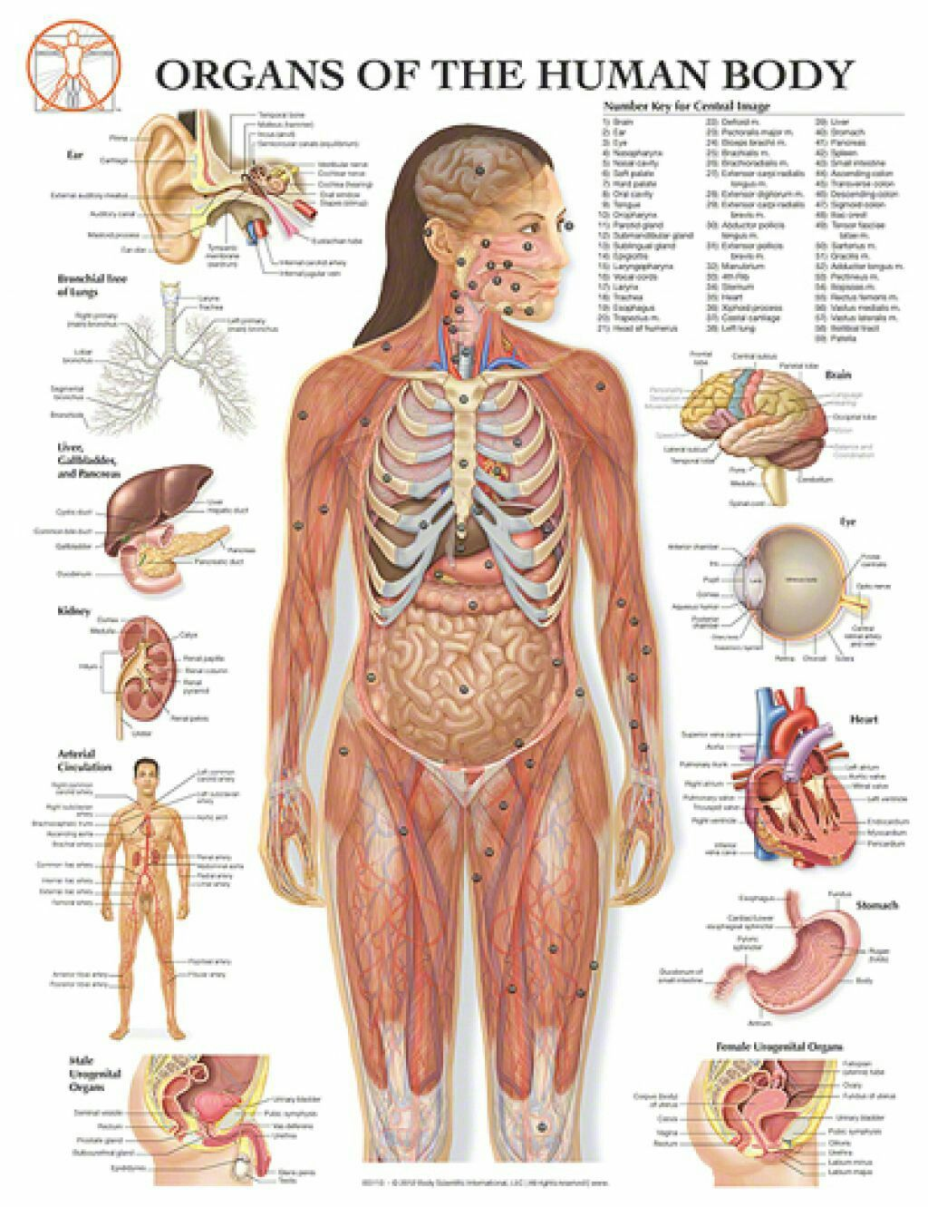 Pin de Tignanakpir Rita en Anatomy and physiology | Pinterest | Anatomía