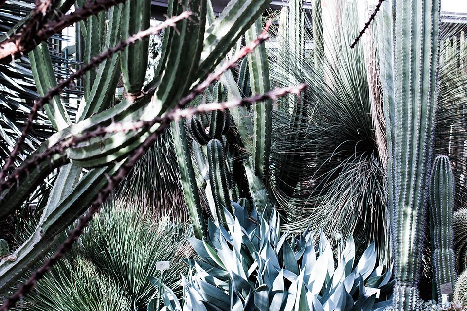 Cactus garden // noanoir.com