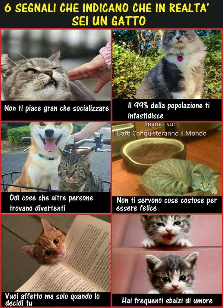 Ssono Un Gatto Con Immagini Umorismo Divertente Sugli Animali
