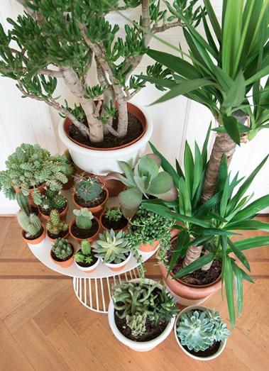 Pin von cameron mogensen auf quirky and cute pinterest for Dekor von zierpflanzen
