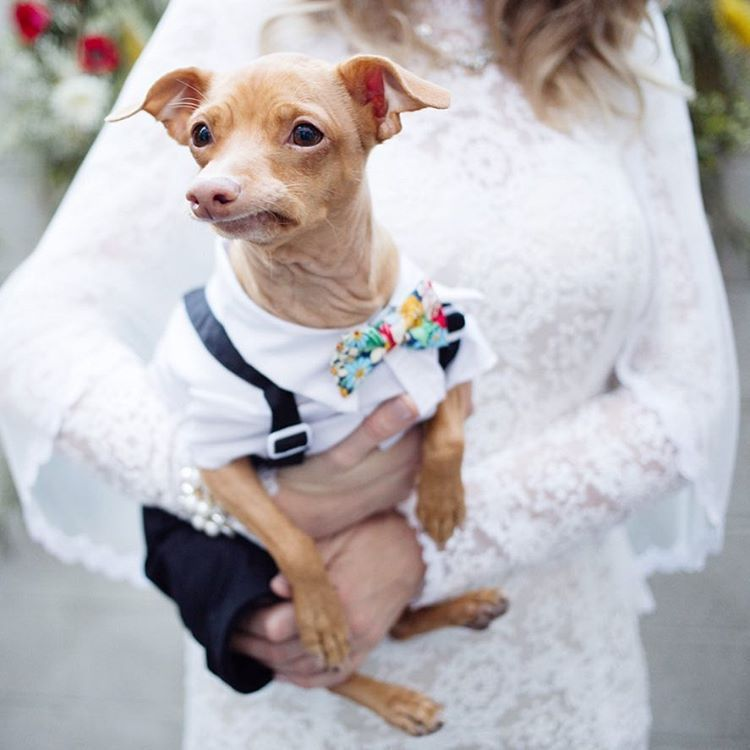 Cutest Tuna from Tunameltsmyheart (instagram profile, link) and oh, look at that divine wedding dress!!!