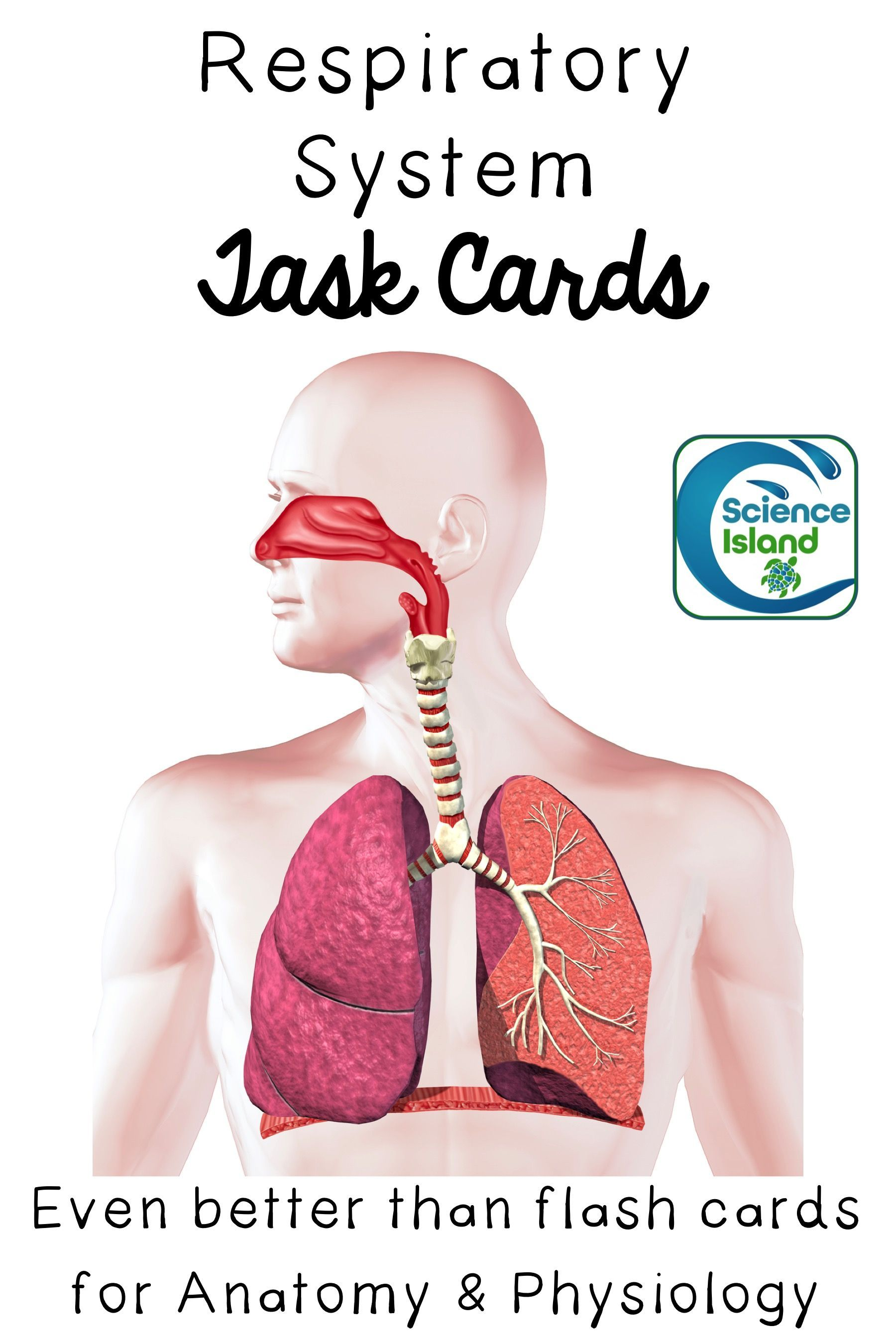 Respiratory System Task Cards with PowerPoint Review   Pinterest ...