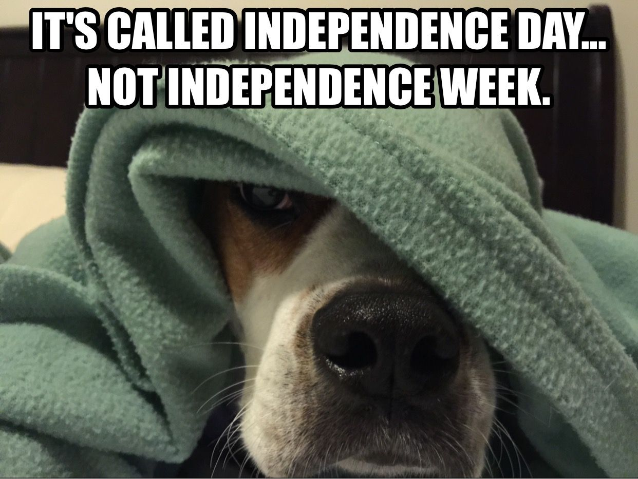 Fireworks Are Not My Favorite Dogs Memes Dogmemes Boxer Pit Boxerpit Humor Chewiesteve Dog Memes I Love Dogs Dogs And Fireworks