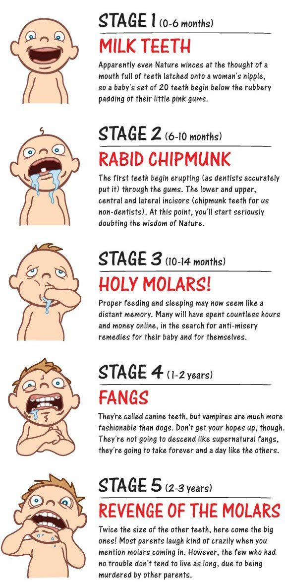 Young Family Dental = Baby Tooth Eruption Stages- Hilarious