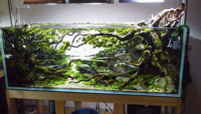Aquascape Aquarium Design Ideas 50