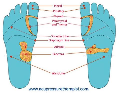 foot reflexology chart sex organs in Corona