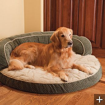Some breeds of dogs are prone to hip, joint, and arthritis problems. Memory foam and orthopedic beds are great for them! Remember, it's our responsibility to take care of them!