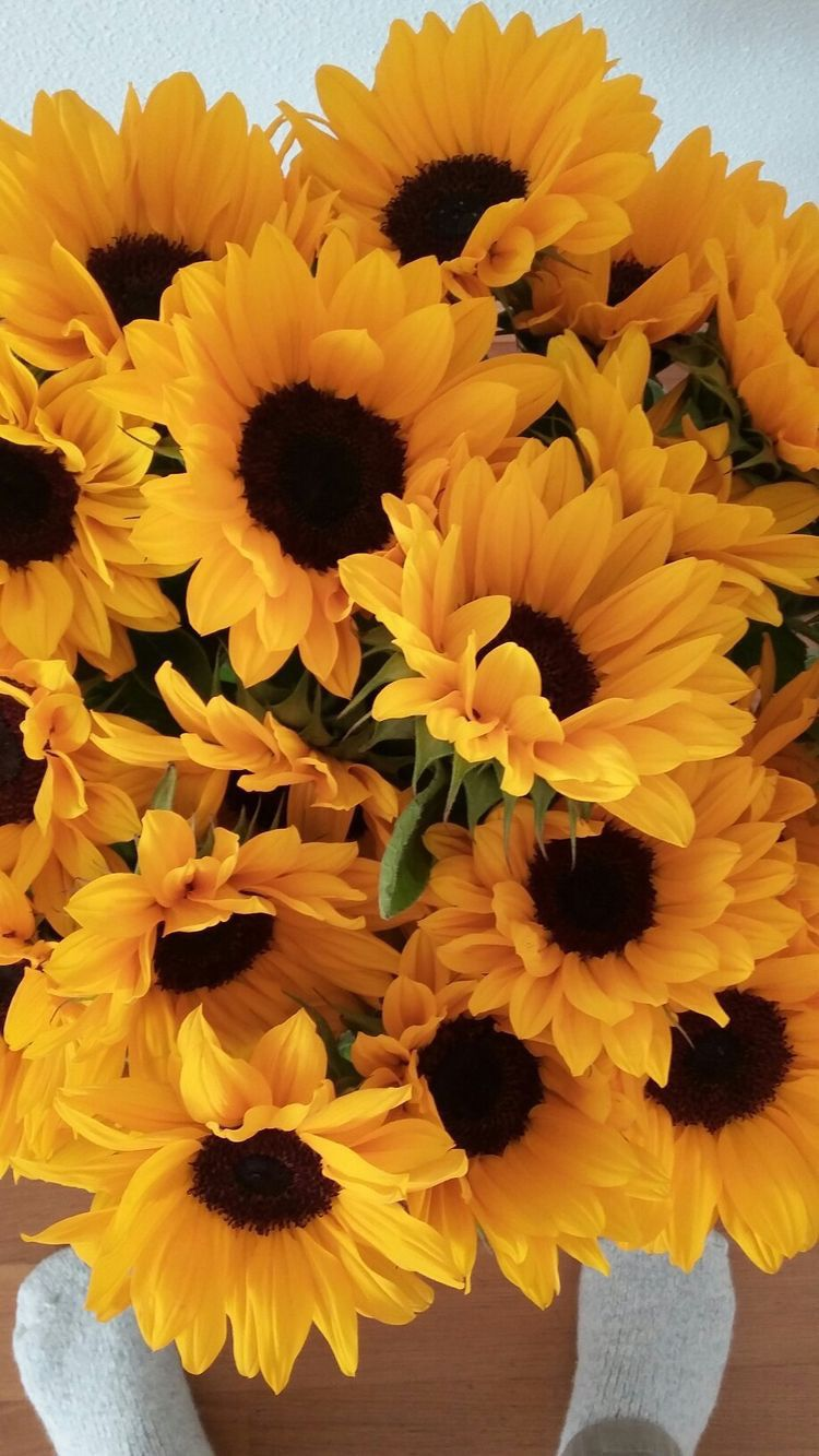 Pin By Chloe On Yellow Sunflower Pictures Sunflower