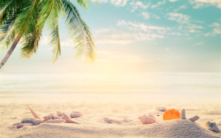 Download Wallpapers Tropical Islands Sand Beach Accessories Seashells Palm Trees Starfish Travel Concepts Besthqwallpapers Com Summer Vibes Beach Summer Beach Summer Vibes Adventure