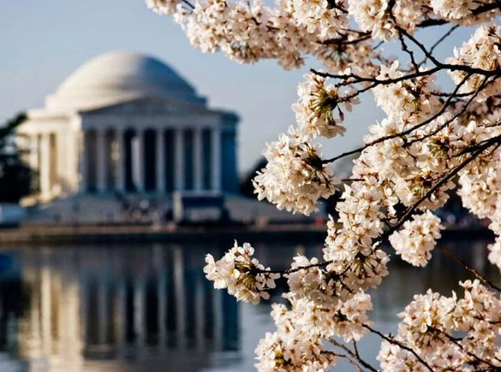 Washington DC is blooming..