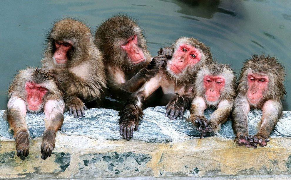 скажи обезьяны и вода картинки смотрел всяких сайтах
