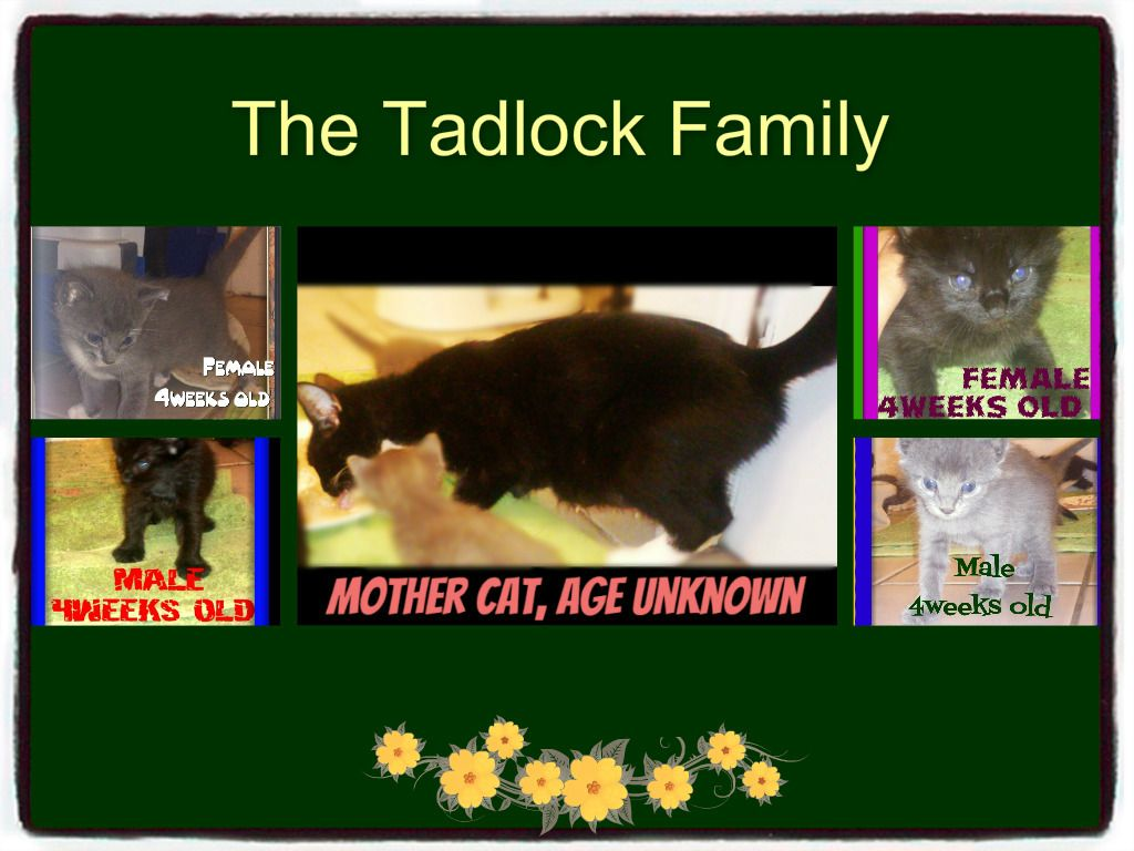 lizardmarsh mart: Internet: From IMOM.org The Tadlock Family - Mommy Cat and her 5 Kittens Need Spaying/Neutering