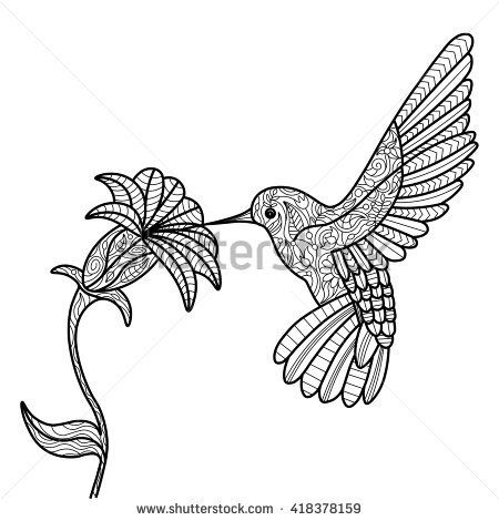 hummingbird and flower coloring book for adults vector illustration - Hummingbird Flower Coloring Pages