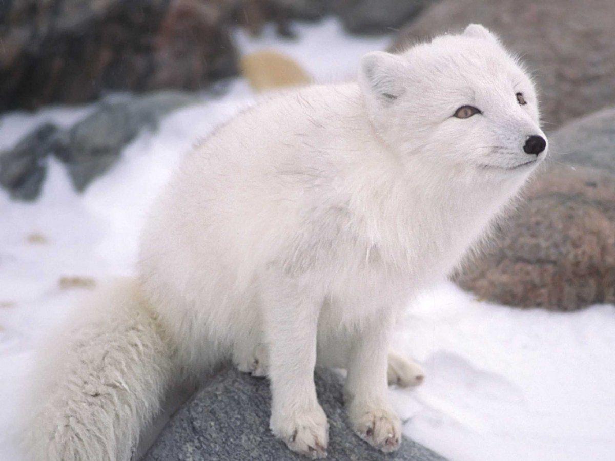 The 20 Cutest Wild Animals On Earth Cute Wild Animals Cutest Animals On Earth Cute Animals