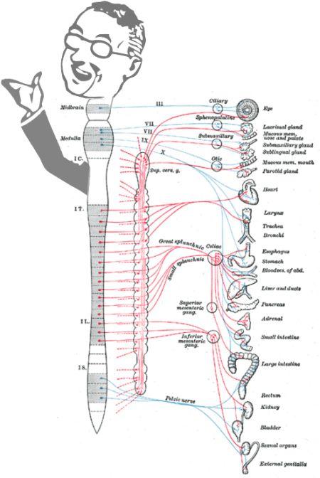 autonomic nervous system | Virtual Body Language | Bioinformatics ...
