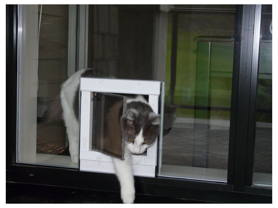 Sneaking Out Of The Cat Door In The Window What A Through Glass Pet