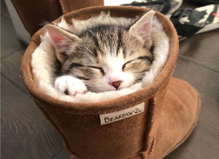Boot is a find bed.