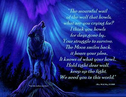 Beautiful Wolf quotes, Warrior quotes, Wolf pack quotes