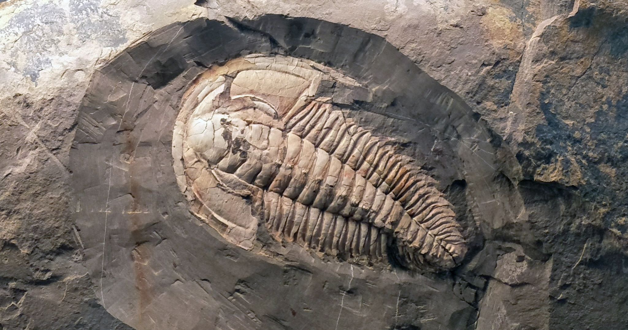 Fossil Of Giant Sea Creature Discovered In South Australia