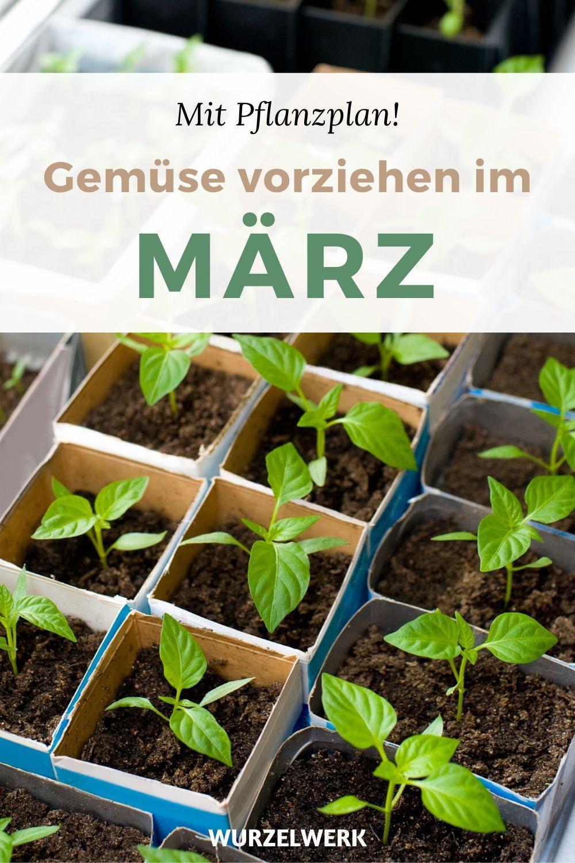 Gemüse vorziehen im März