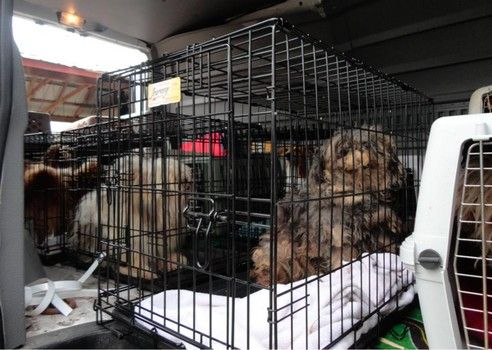 Neglected Dogs Rescued From Amish Puppy Mill Farm In Ohio Puppy Mills Puppies Rescue Dogs