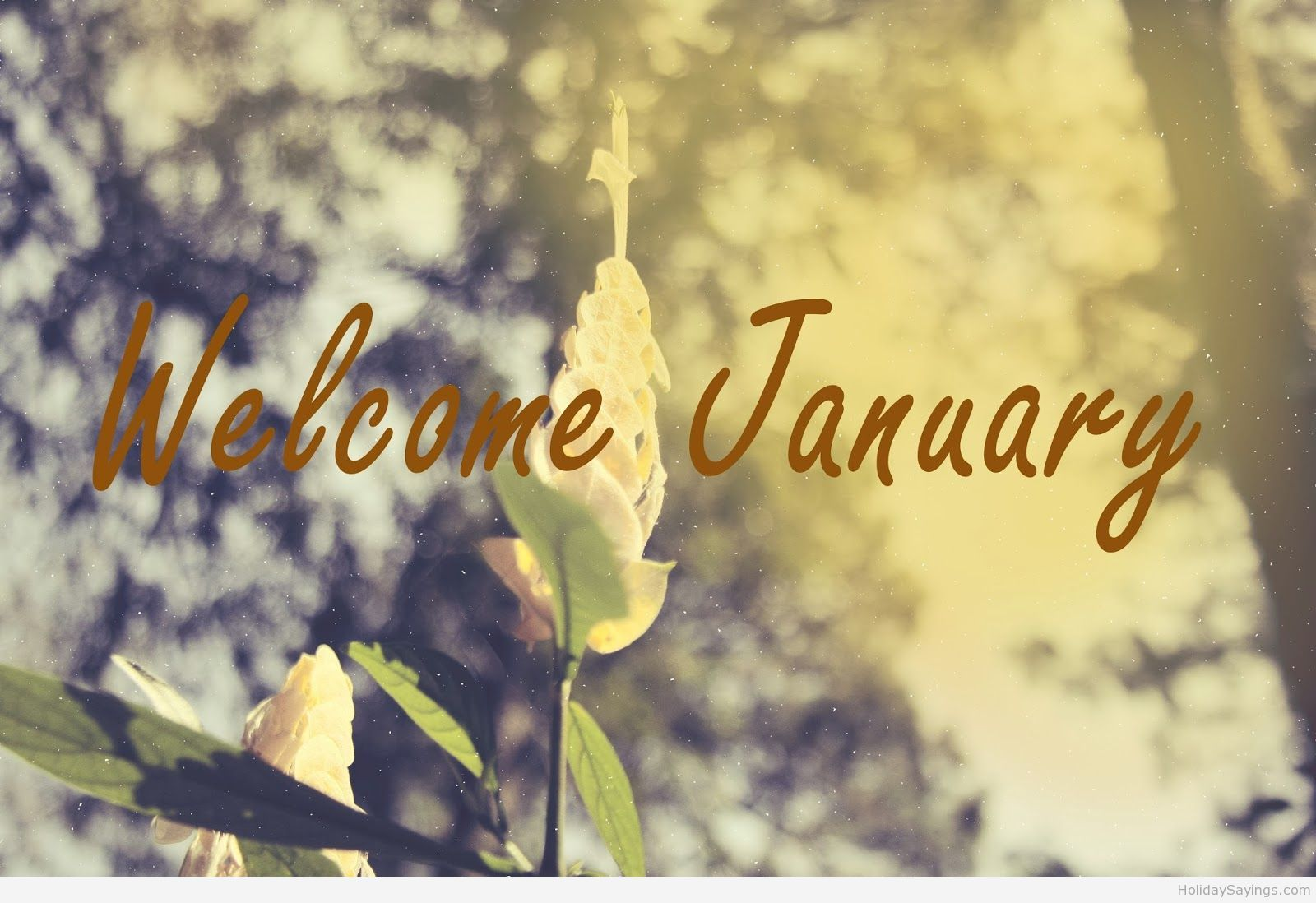 Welcome January Hd Wallpaper 2015