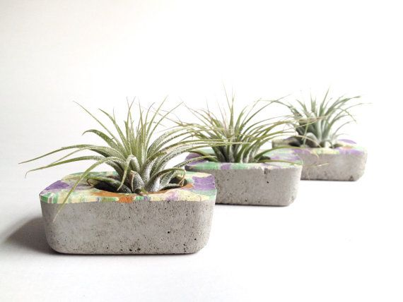tiny rectangular concrete planter with pastel swirl rim + optional air plant. handmade modern decor. | ReRunRoom |