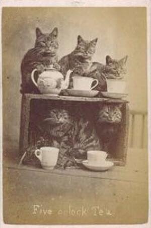 Cats at a tea party