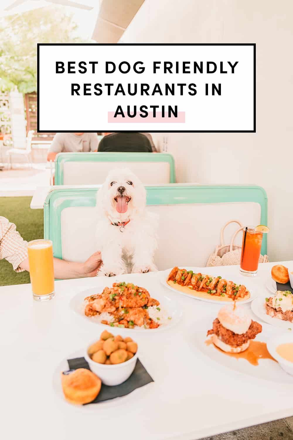 19 Best Dog Friendly Restaurants In Austin A Taste Of Koko In 2020 Dog Friends Boozy Brunch Austin City Guide
