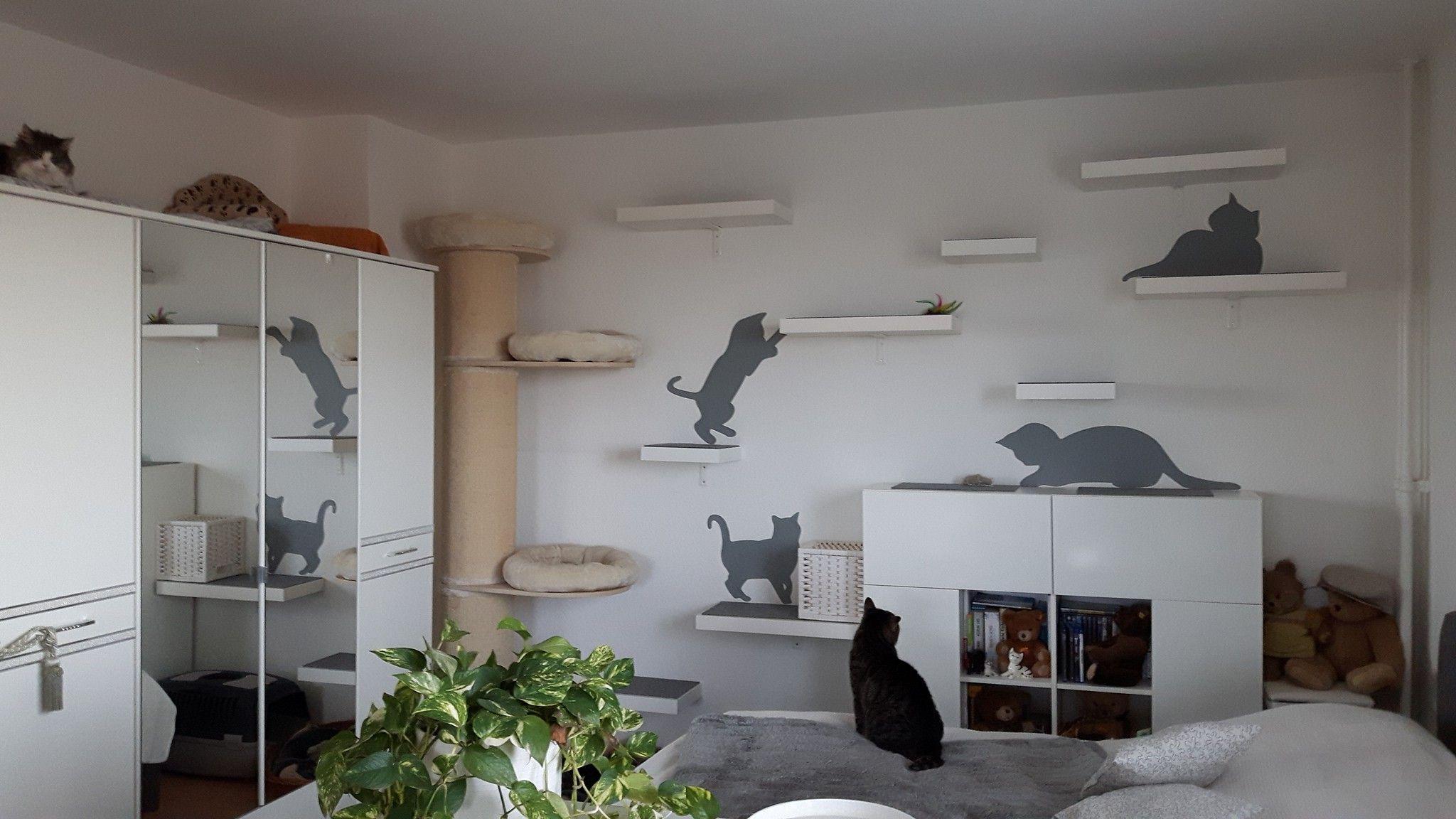Katzen Wand, Catwalk Katzen Und Katzen