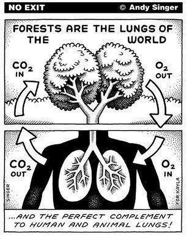 The Circle Of Life And Breath