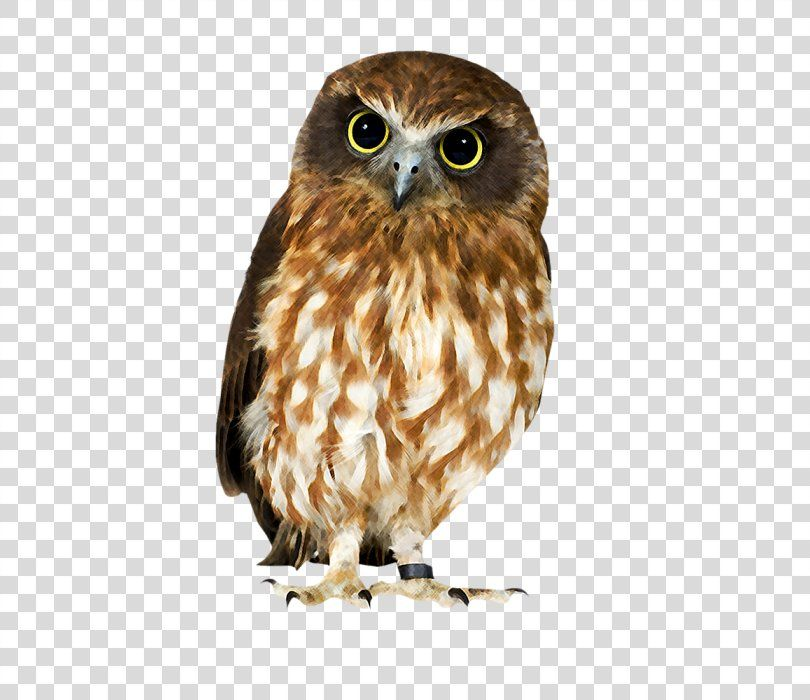 Owl Hawk Strix Newarensis Falcon Our Feathered Friends Owl Png Owl Barn Owl Beak Bird Bird Of Prey Owl Png Barn Owl Owl