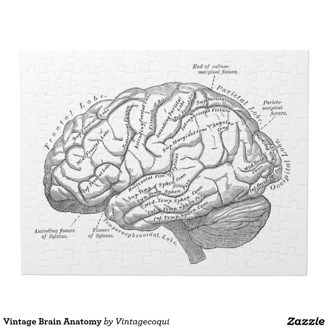 Vintage Brain Anatomy Jigsaw Puzzle | Things I want | Pinterest ...