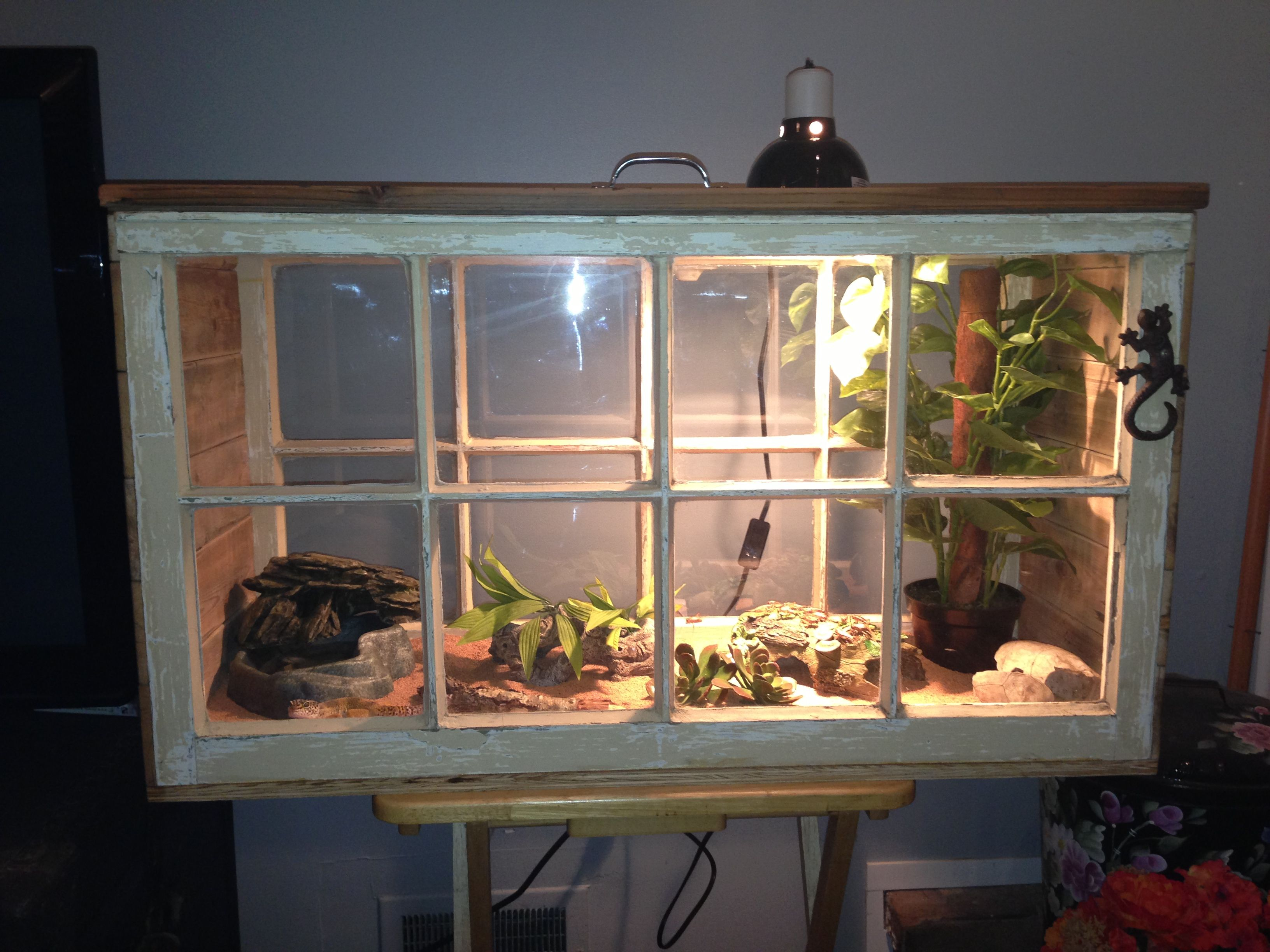New lizard home with recycled windows and pallets leopard gecko