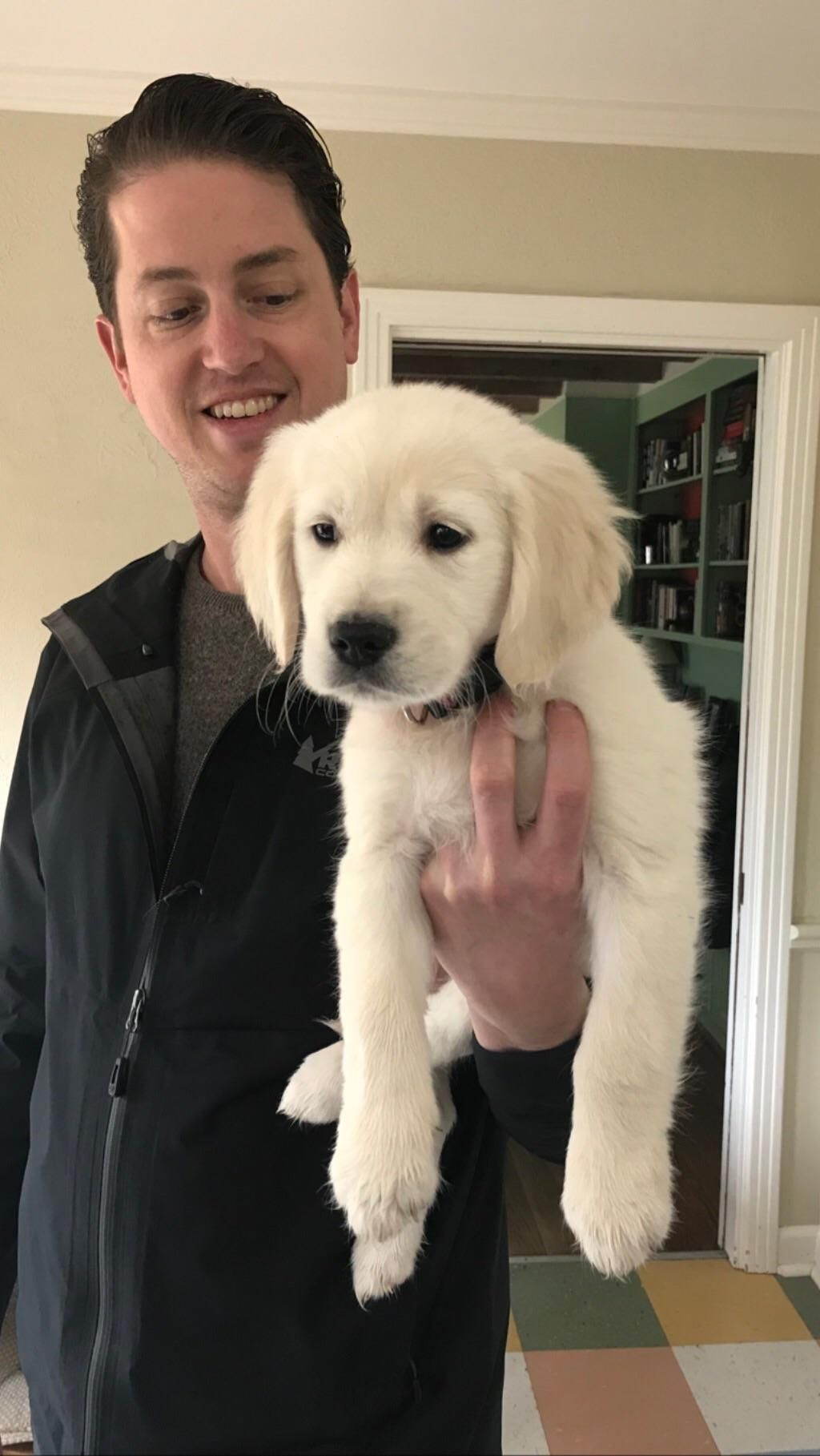 Meet Dolly! English Golden from Nashville. Incredibly