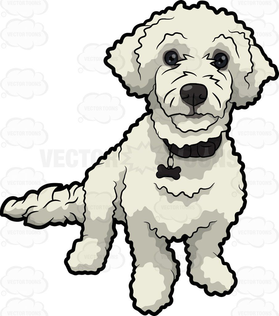 A Cute White Poodle Poodle Drawing