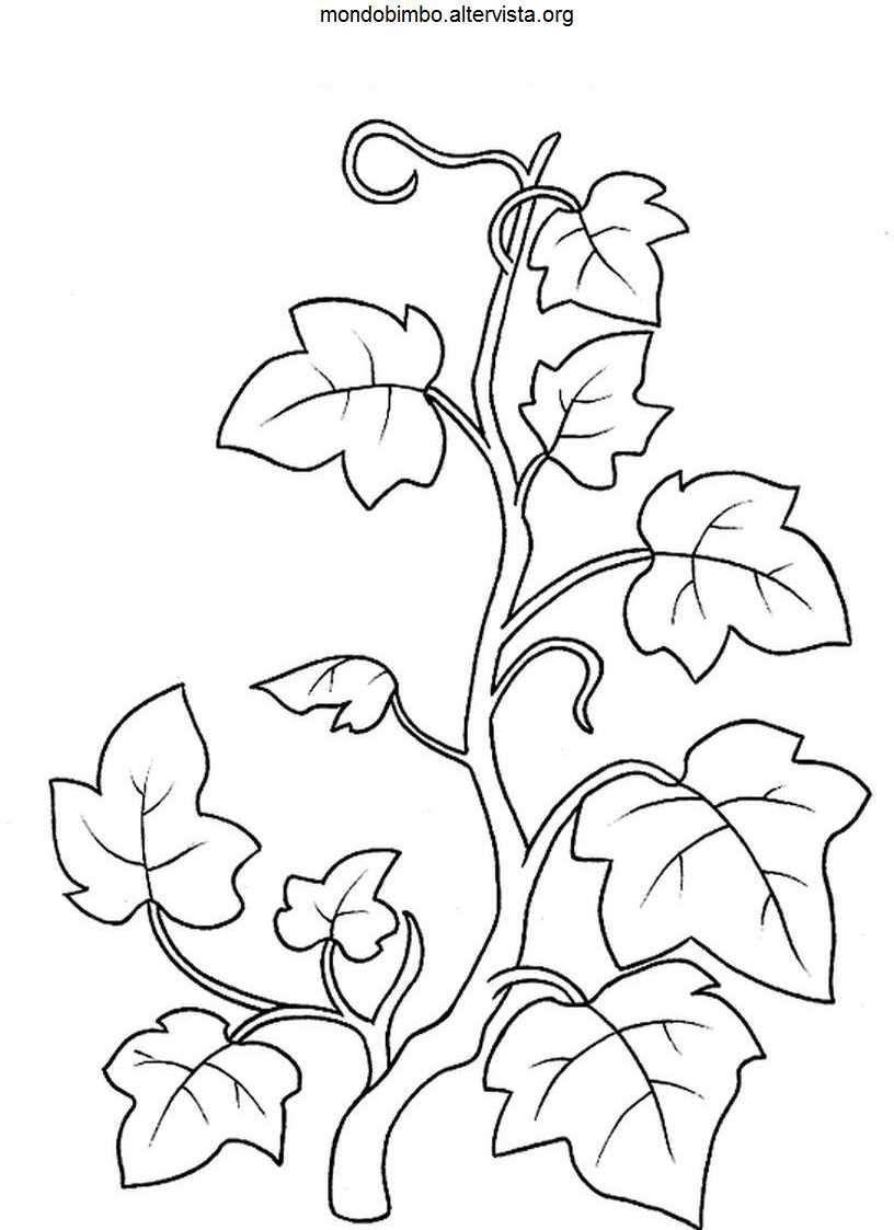 Risultati Immagini Per Edera Disegno Black And White Disegno