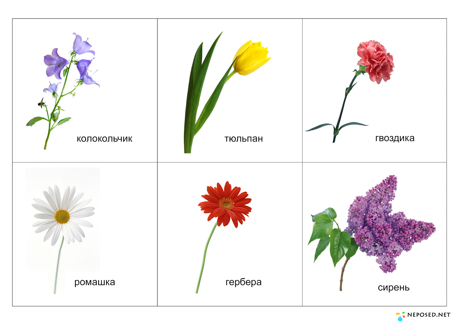 Садовые цветы картинки с названиями детский сад, днем