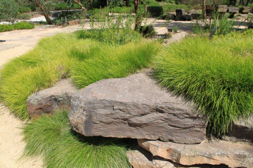 Garden Ideas Australian Native lomandra rock garden | gardens on slopes | pinterest | lomandra