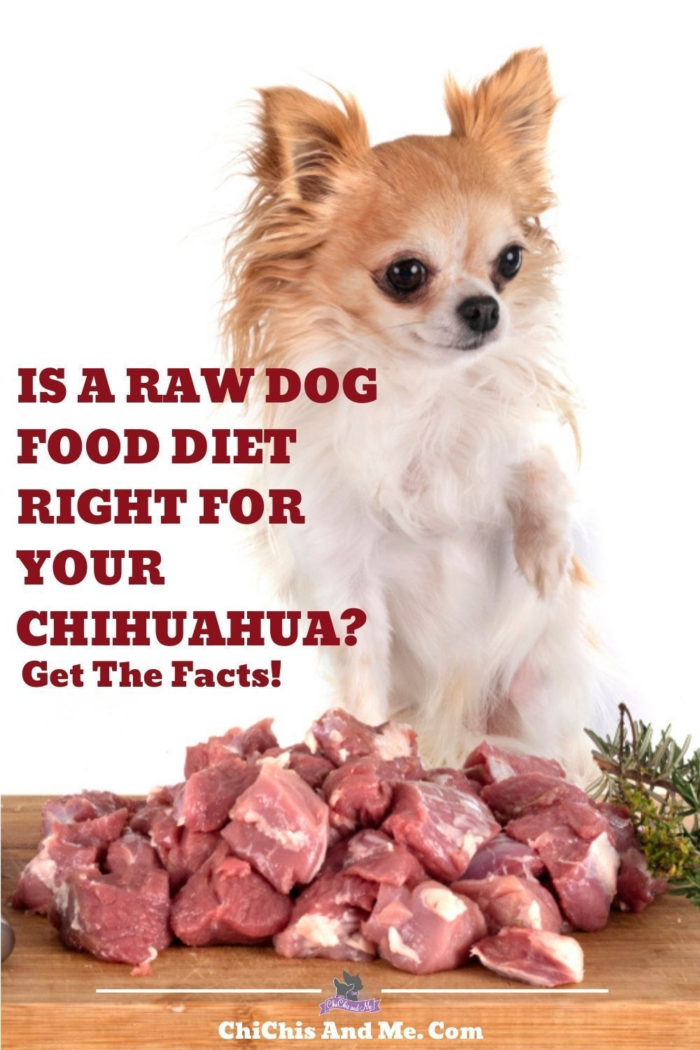 What You Don T Know About Raw Diets Raw Dog Food Diet Raw Diet Raw Dog Food Recipes