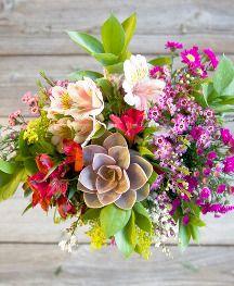 Online Shop Www Fliedertraum De Google Flieder Pflanzen Heilpflanzen