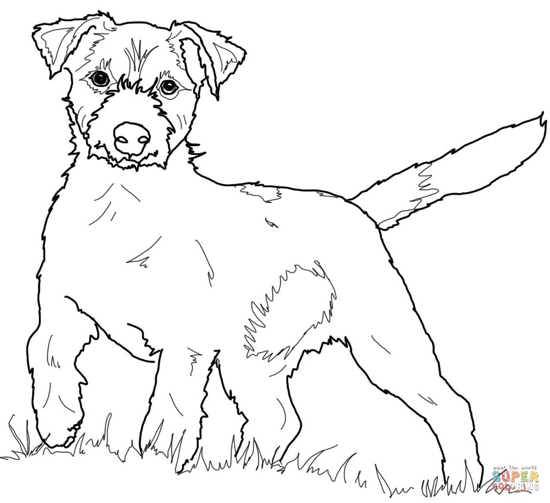 Jack Russell Terrier Super Coloring Coloring Pages Dog