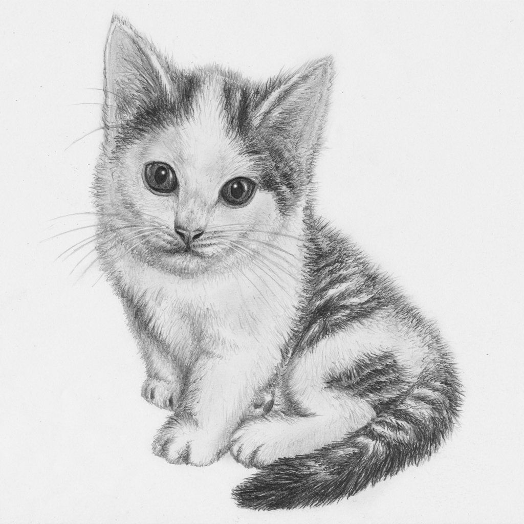 Drawn kitten pencil drawing pencil cats kitten drawing