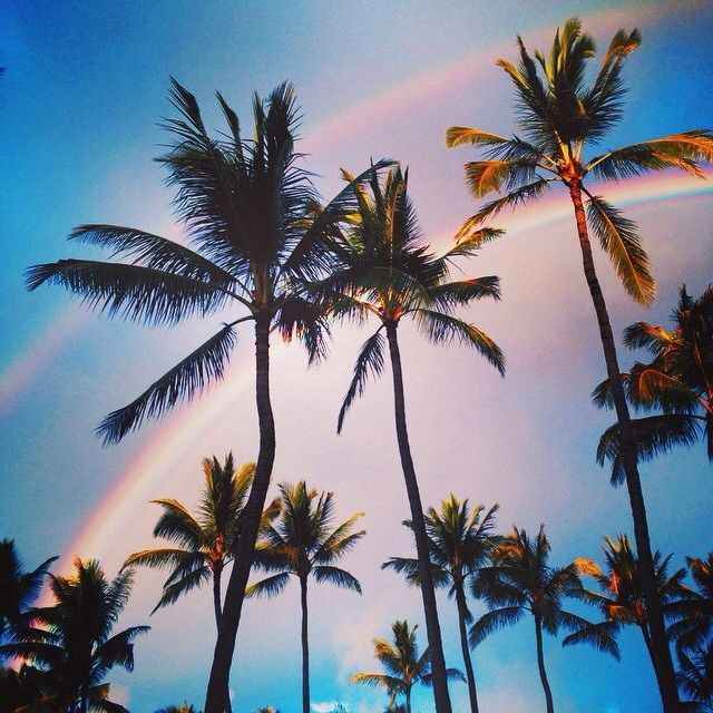 palm trees Dream Pinterest Palm Summer and Summer vibes