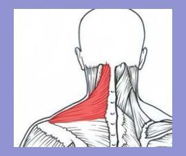 Myofascial Release: Tight neck and shoulder self-treatment | Traps And Shoulders Workout | Kn... #trapsworkout Myofascial Release: Tight neck and shoulder self-treatment | Traps And Shoulders Workout | Knee exercises |  Trap Workout For Women . #gymmotivation #Good to know! #trapsworkout