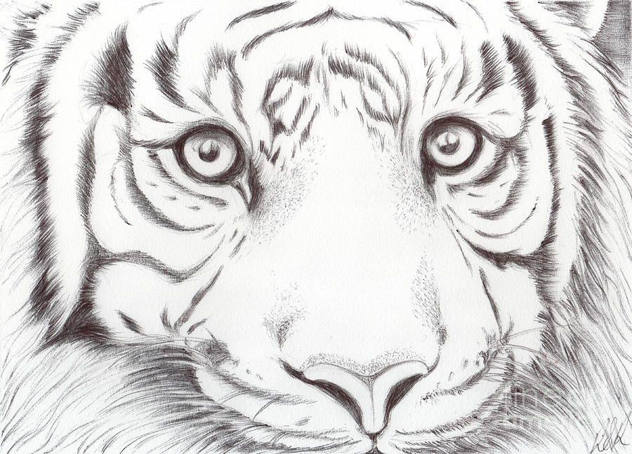 Animal Kingdom Series Wild Cat by Bobbie S Richardson in
